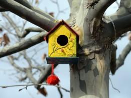"""Altınköy'deki kuşlar """"ev""""lendi"""